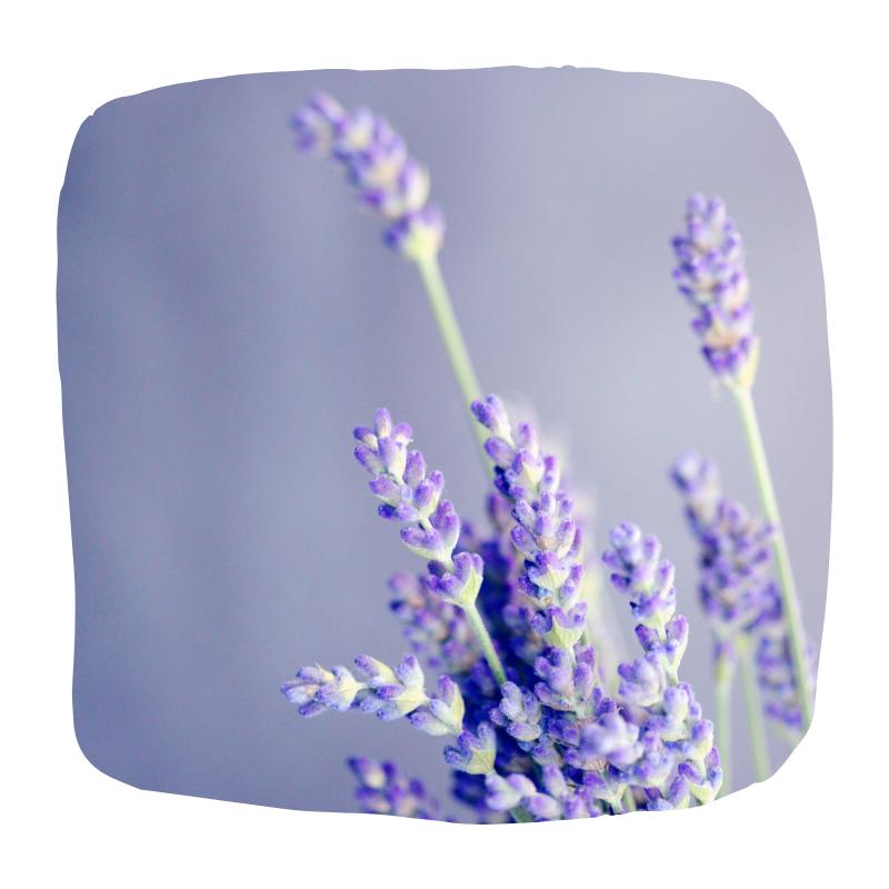 bloemen geur
