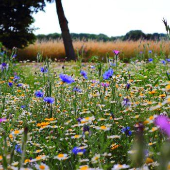 flowers-summer-meadow-wild-flowers-51548